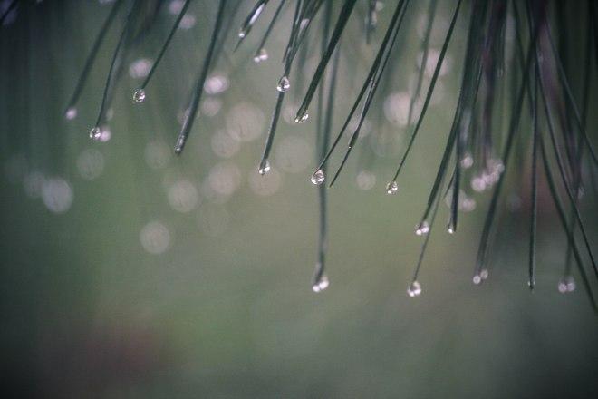 Rain-9781
